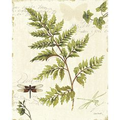 Ivies and Ferns Print