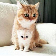 Картинки по запросу kitty and cat #kittens