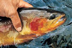 The Wind River Range - Fly Fisherman