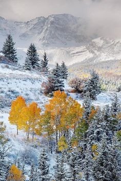 Nothing on Earth is more beautiful than changing aspen trees and snow. Dallas Divide, Colorado by Del Higgins What A Wonderful World, Beautiful World, Beautiful Places, Beautiful Pictures, Winter Szenen, Winter Time, Winter Storm, Landscape Photography, Nature Photography