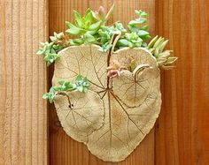 Ceramic Leaf Wall Pocket, Medium - Made with 3 Real Hollyhock Leaves - Clay Succulent or Plant Holder - Pottery Wall Hanging Pottery Workshop, Succulent Wall, Small Leaf, Hollyhock, Clay Flowers, Small Plants, Wall Pockets, Plant Holders, Clay Crafts