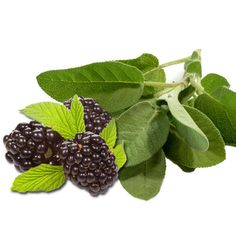 Blackberry Sage: Absolutely fantastic! The perfect blend of juicy blackberries tempered with sage. Sweet and succulent, it is sure