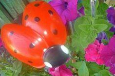 Ladybug Craft Colorful