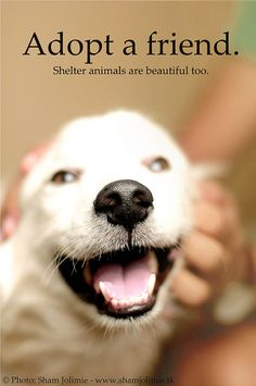 Shelter animals are beautiful too!           Rescue and Adopt! Don't Shop!