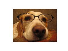 Research shows that as dogs age, they become more nearsighted.
