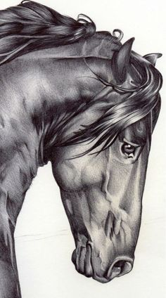 Horses exude emotion and strength.