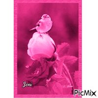 Rose Random Gif, Rose, Pink, Roses