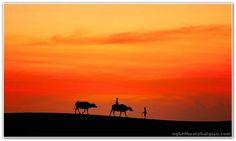 Chùm ảnh: Độc đáo chùm ảnh con trâu quê tôi ảnh 36 Camel, Animals, Animaux, Camels, Animal, Animales, Bactrian Camel, Animais
