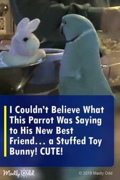 Couldn't Believe What This Parrot Was Saying To His New Best Friend – A Stuffed Toy Bunny! Funny Animal Videos, Funny Animals, Cute Animals, Funny Pets, Singing Lessons, Singing Tips, Funny Birds, Cute Birds, Talking Parrots