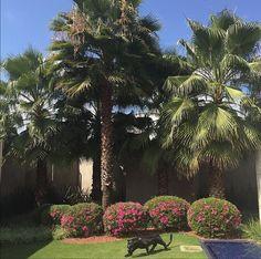 Encantada com a maravilha deste jardim, criado com tanto carinho para nossa querida cliente!!  ・・・ Natureza exuberante! ・・・ #Repost @marclysilva with @repostapp.