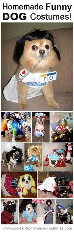 Top 11 DIY Funny Dog Costumes