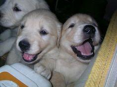 cutest cuddle buddies ever
