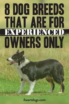 You may be surprised to see which breeds made this list. Calm Dog Breeds, Types Of Dogs Breeds, Dog Breeds List, Best Dog Breeds, Dog Types, Best Dogs For Families, Family Dogs, Best Dogs For Kids, Agility Training For Dogs