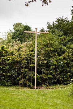 Tall Hop Trellis Idea