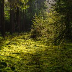 Green-Carpet