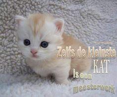 Cute Kittens Munchkin Cat Wallpaper Added on , Tagged : Cute Kittens, Munchkin Cat at Cute Kittens Pictures Pretty Cats, Beautiful Cats, Animals Beautiful, Simply Beautiful, Cutest Kittens Ever, Cute Cats And Kittens, Adorable Kittens, Little Kittens, Cute Fluffy Kittens