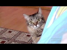 Cute! Watch out! This cute ninja cat is fast.