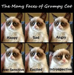 I fucking love Grumpy Cat. Emotions of Grumpy Kitty Cat And Dog Memes, Funny Cats And Dogs, Cats And Kittens, Funny Animals, Cute Animals, Animal Funnies, Grumpy Cat Quotes, Funny Grumpy Cat Memes, Grumpy Kitty