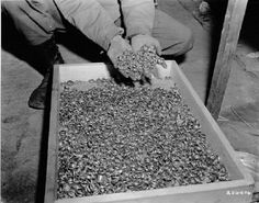 Wedding rings found by US army soldiers near the Buchenwald concentration camp. Germany, May 1945.