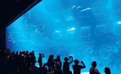 Resorts World Sentosa - Main Aquarium Tank