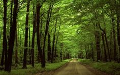Sumter National Forest is a National Forest in Clinton. Plan your road trip to Sumter National Forest in SC with Roadtrippers. Forest Wallpaper, Nature Wallpaper, Wallpaper Desktop, Wallpaper Gratis, View Wallpaper, Wallpaper Gallery, Landscape Wallpaper, Black Wallpaper, Mobile Wallpaper