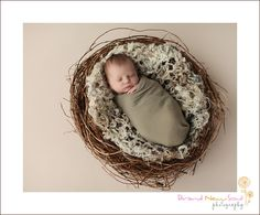 newborn photo shoot of the baby in a Nest @Holly Tollison