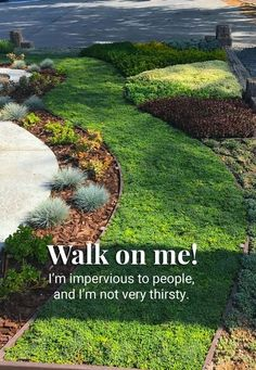 Better Than Grass – The Best Drought-Tolerant Grass Alternative Available Succulent Landscaping, Front Yard Landscaping, Landscaping Ideas, Hillside Landscaping, Lawn And Landscape, Landscape Design, Desert Landscape, Drought Tolerant Grass, Ground Cover Drought Tolerant