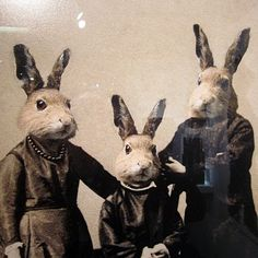 Beneath this familiar facade brews forced foster fecundity.  These Brighton rabbits, photographed by Charlotte Cory, are seething with unrest.  They shoot foster Rabbits, don't they?