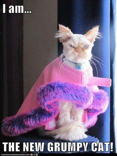 I am...  Sinister Cat,  THE NEW GRUMPY CAT!
