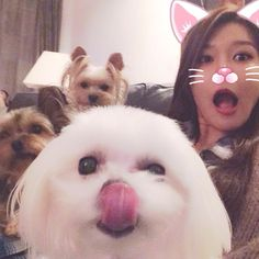 Sooyoung puppies SNSD SNS
