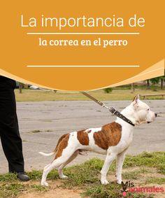 La importancia de la correa en el perro  ¿Quieres saber la importancia de la correa en el perro? Si aún tienes dudas, en este artículo compartimos información sobre este importante tema.