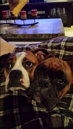 Boxers.....you have to have more than one