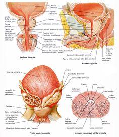 Left Side Of Body Anatomy Human Anatomy Drawing Pinterest