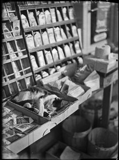 Chat endormi chez le marchand de graine / Cat sleeping in the seed merchant, ca 1930, André Kertész.