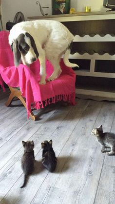 The dog is scared of the kitten