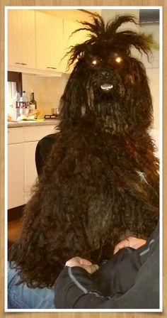 Bajnok Dogs, Animals, Animales, Animaux, Pet Dogs, Doggies, Animal, Animais