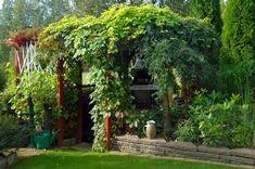 Garden With Pergola Featured Vine Climbing Plants Wood Pergola, Pergola Swing, Pergola Shade, Pergola Plans, Diy Pergola, Corner Pergola, Garden Shrubs, Garden Trellis, Garden Plants