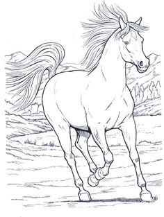 horses_8 Adult coloring pages