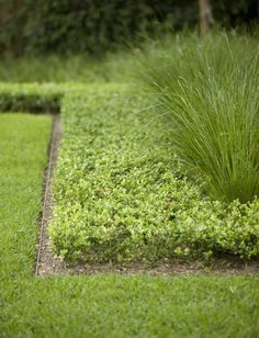 Installed low to the soil, metal edging can be mown over, eliminating the painstaking process of edging a lawn.