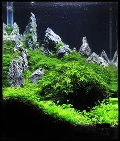 Aquascape inspiration