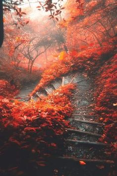 Beautiful World, Beautiful Places, Beautiful Pictures, Autumn Photography, Landscape Photography, Image Photography, Photography Courses, Autumn Scenery, Autumn Aesthetic