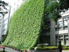 green curtain / sunshade