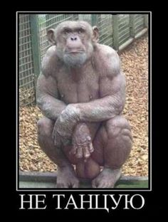 51 Ideas Funny Quotes Pictures God For 2019 Funny Picture Quotes, Funny Quotes, Funny Memes, Primates, Funny Pictures For Facebook, Creepy Images, Funny Animals With Captions, Best Instagram Photos, Marriage Humor