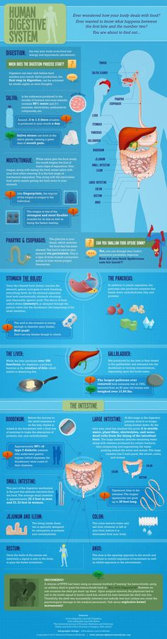 A great infographic on your digestion and how it works! Be in the know...your digestion is very important!