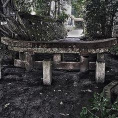 【dfc_corp】さんのInstagramをピンしています。 《鹿児島県 桜島  Shrine was buried in volcanic ash  #Sakurajima #桜島 #風景 #風景写真 #日本の風景 #写真 #photography #photographer #beautiful #火山 #vacation #volcano #shrine #volcanicash #nature #naturelovers #travel #鳥居 #earth #japan #mountain #mountains #カメラ好きな人と繋がりたい #カメラ #登山 #森林 #美しい #絶景 #landscape #amazing》