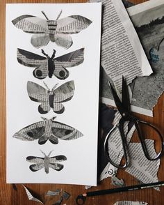 "Martha (@dandelion.root) on Instagram: ""Monday moths, cut out of a guardian front page"