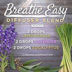Breathe Easy Breathe Easy Essential Oil Diffuser Blend Recipes For Smooth Breathing<br> Essential Oil Blends For Colds, Essential Oils For Colds, Essential Oils Guide, Essential Oil Diffuser Blends, Breathe Essential Oil, Essential Oils Headache, Essential Oils Depression, Diy Diffuser Oil, Young Living Essential Oils Recipes Cold