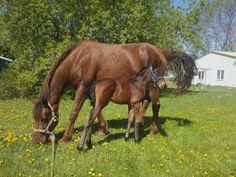 Brandy's foal Moonshine