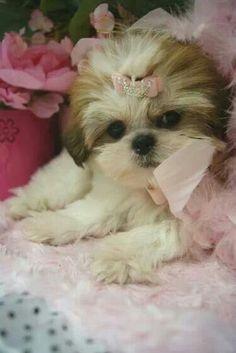 way cute!