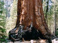 Sequoia National Park, United States